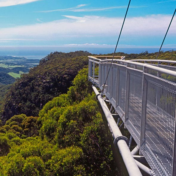 Treetop Walkway West Coast New Zealand